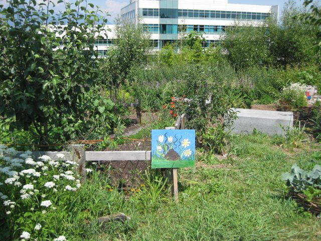 chinacreek-garden