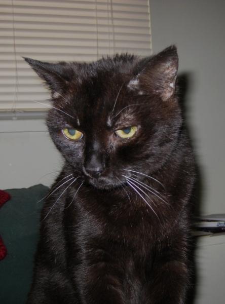 cat-06-05-2009